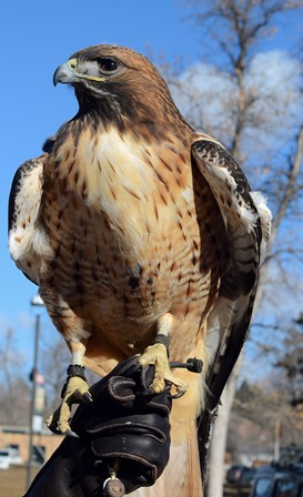 Donate to support the Black Hill Raptor Center, Rapid City, SD