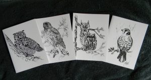 Four Raptor Hand-drawn Note Cards