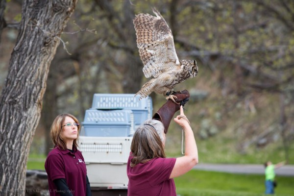 Help build the New Black Hills Raptor Center Facility