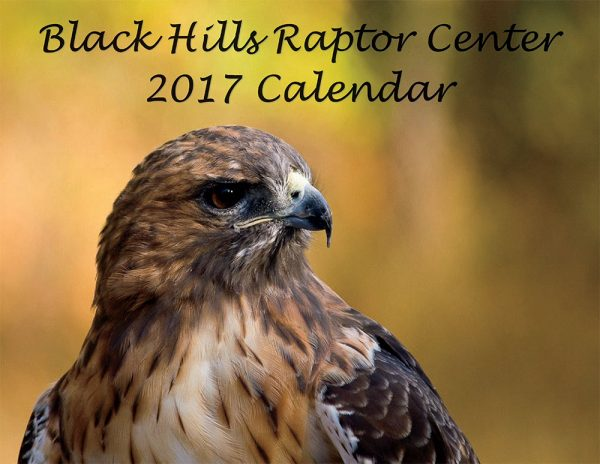 2017 Raptor Calendar, Black Hills Raptor Center, Christmas Gift, Hanukkah Gift, Fund Raiser for BHRC